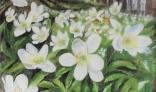 Výstava diel Márie Liškovej