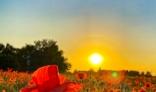 AMFO 2021 - Ágnes Jónásová - Posledné slnečné lúče